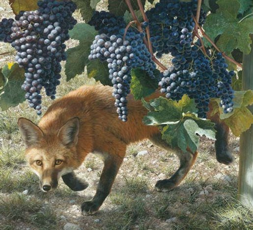 Foxes spoiling vine